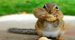 Animalele salbatice din Canada (III)