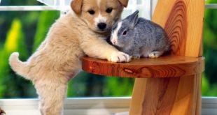 Reguli privind acceptarea animalelor de companie ale chiriasilor